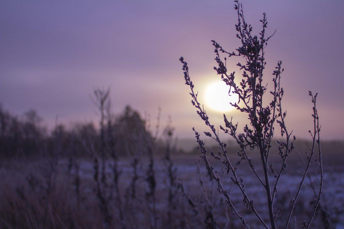 Vintermørket er den overvejende årsag til en vinterdepression
