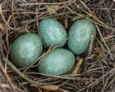 Hvad vejer et æg?
