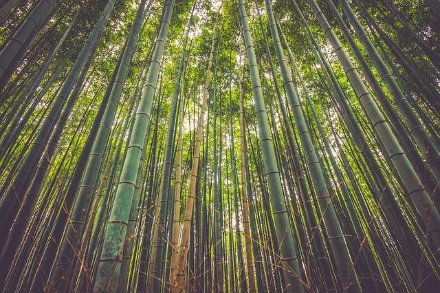 Bambus – fremtidens materiale til tekstiler
