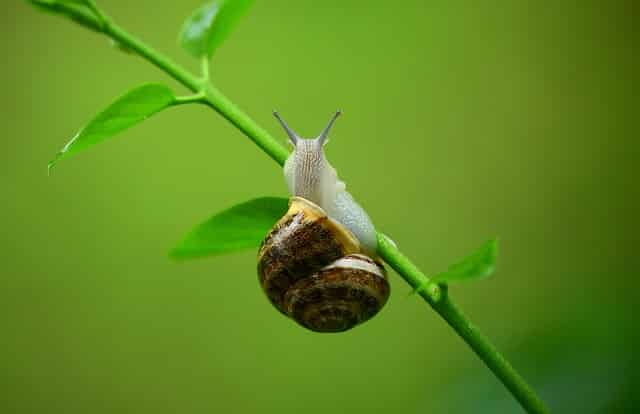 Stop snegleangreb med et effektivt sneglehegn
