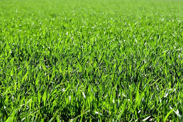 Derfor skal du græsarmere din have