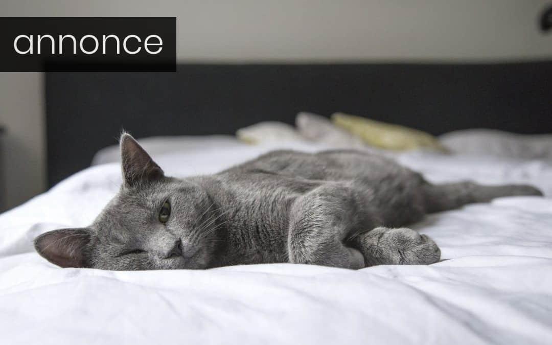 Forbered dit hjem til din nye kat